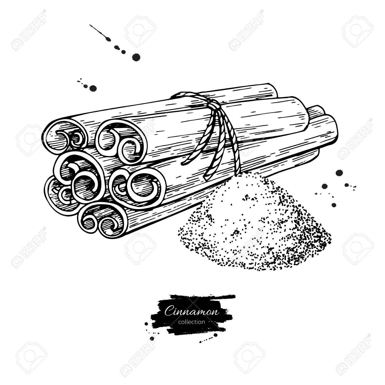 Bâton De Cannelle Liée Bouquet Et Poudre Dessin Vectoriel Croquis Dessiné Main Illustration De La Nourriture Saisonnière Isolée Sur Blanc épice De