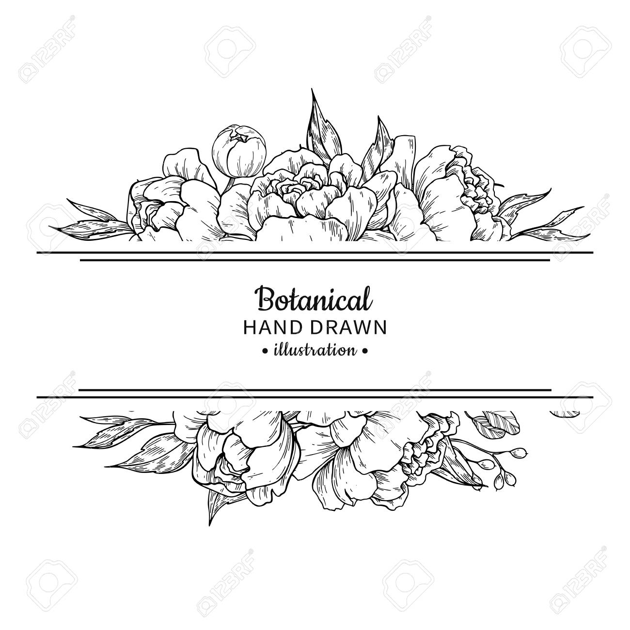 Flower Vintage Border With Peony And Roses Botanical Drawing