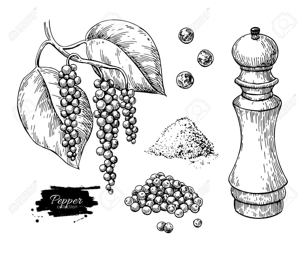 Black pepper vector drawing set. Peppercorn heap, mill, dryed seed, plant, grounded powder. - 101022651