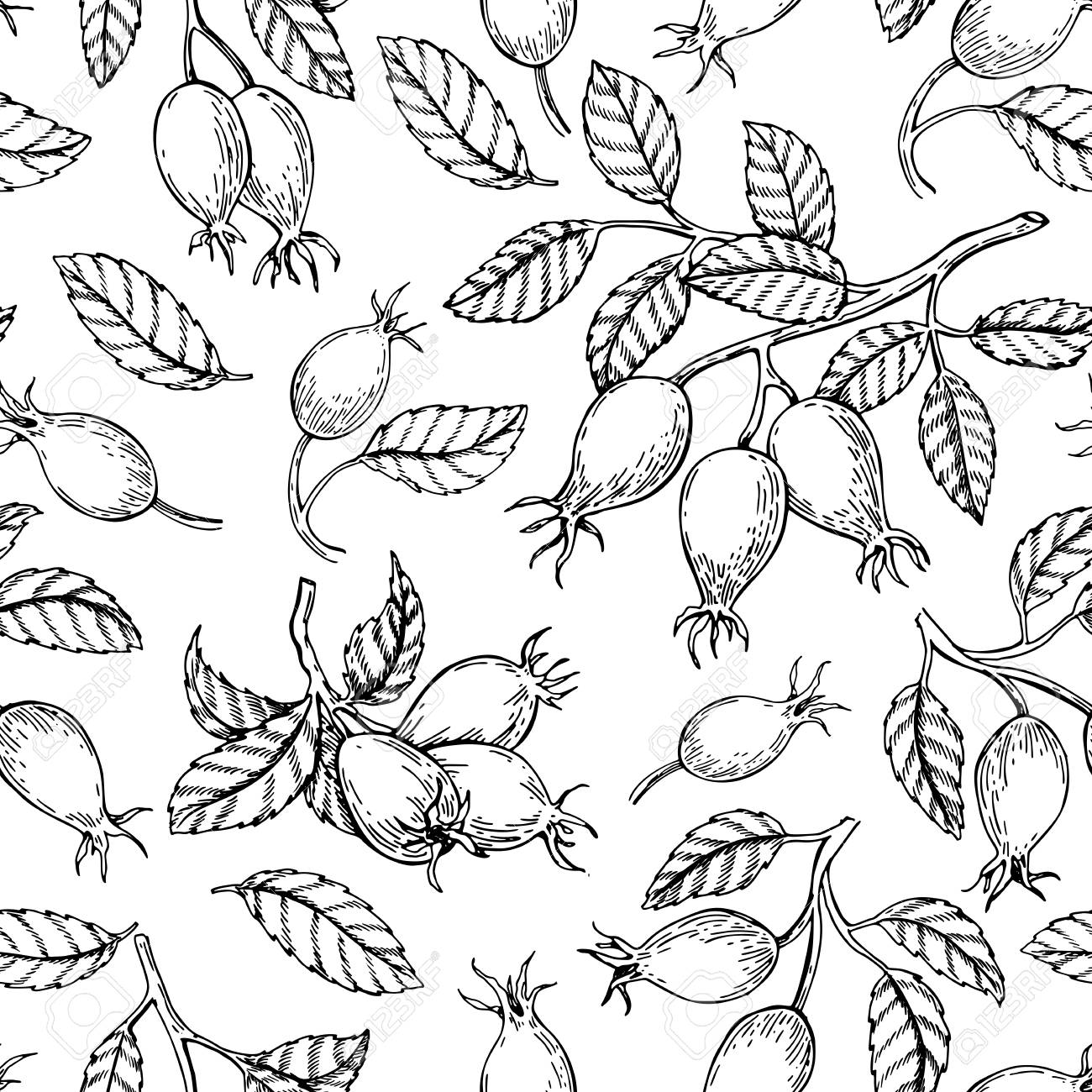Rosehip seamless pattern. Vector drawing. Berry branch sketch on white background. - 106952556