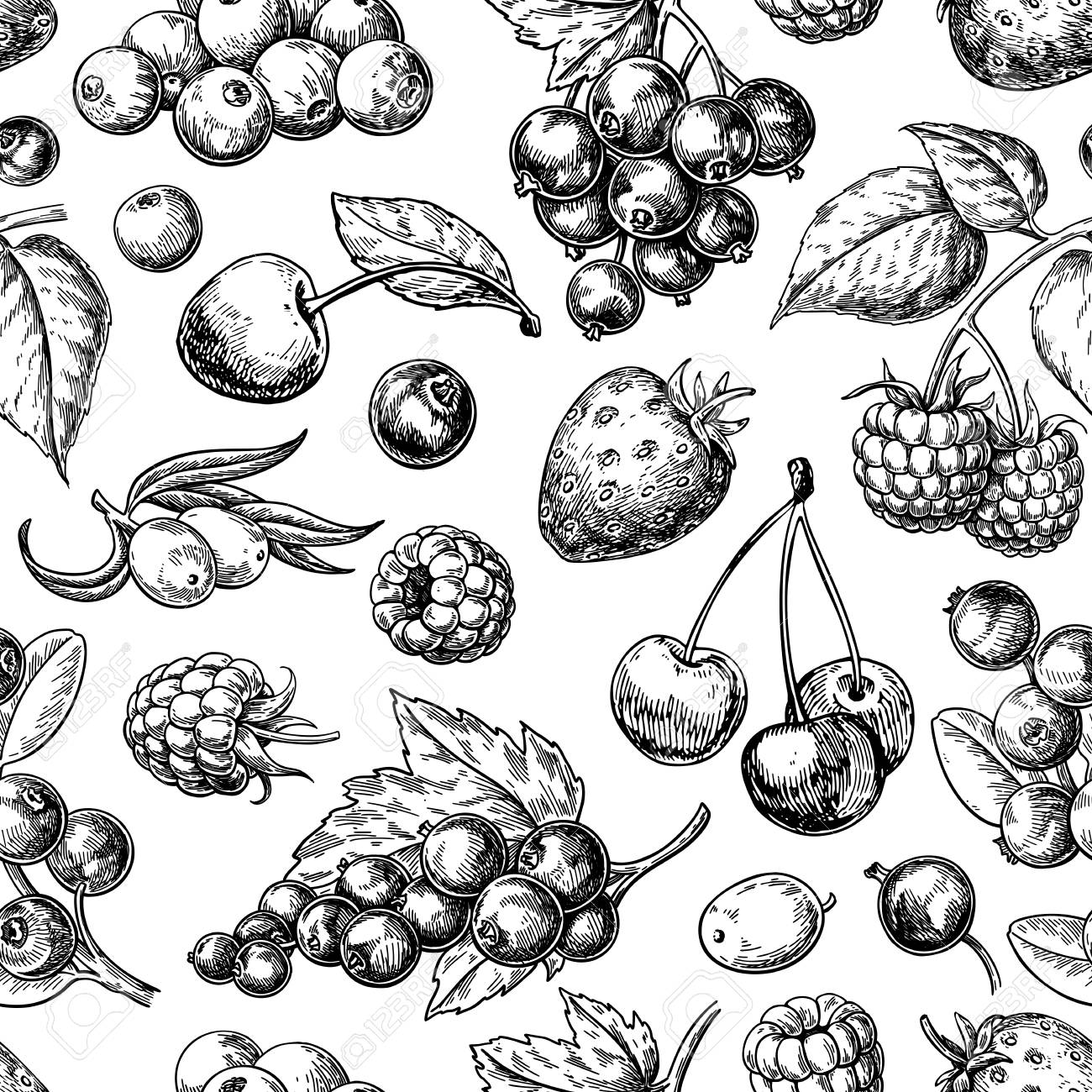 Wild berry seamless pattern drawing. Hand drawn vintage vector background. - 109579496