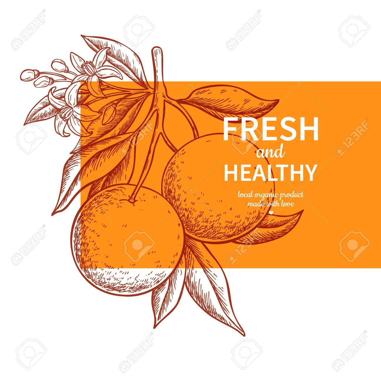 Orange label vector drawing. Citrus fruit engraved template. Hand drawn summer illustration. Vintage banner, product packaging, design concept. Tropical juice poster, grapefruit sign - 118839732