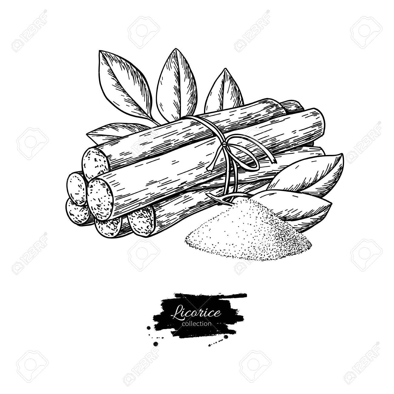 Licorice Root Bunch With Leaves Vector Drawing Botanical Illustration Royalty Free Cliparts Vectors And Stock Illustration Image 137120091