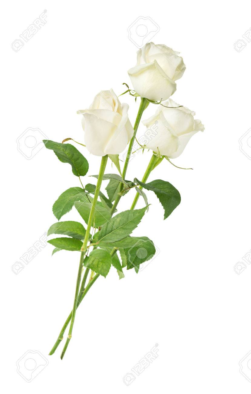 Elegant Bouquet Of Three White Roses On A Long Stem With Green