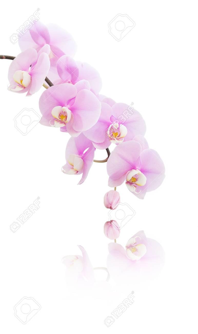 Immagini Stock Banner Verticale Con Varietà Di Fiori Di Orchidea