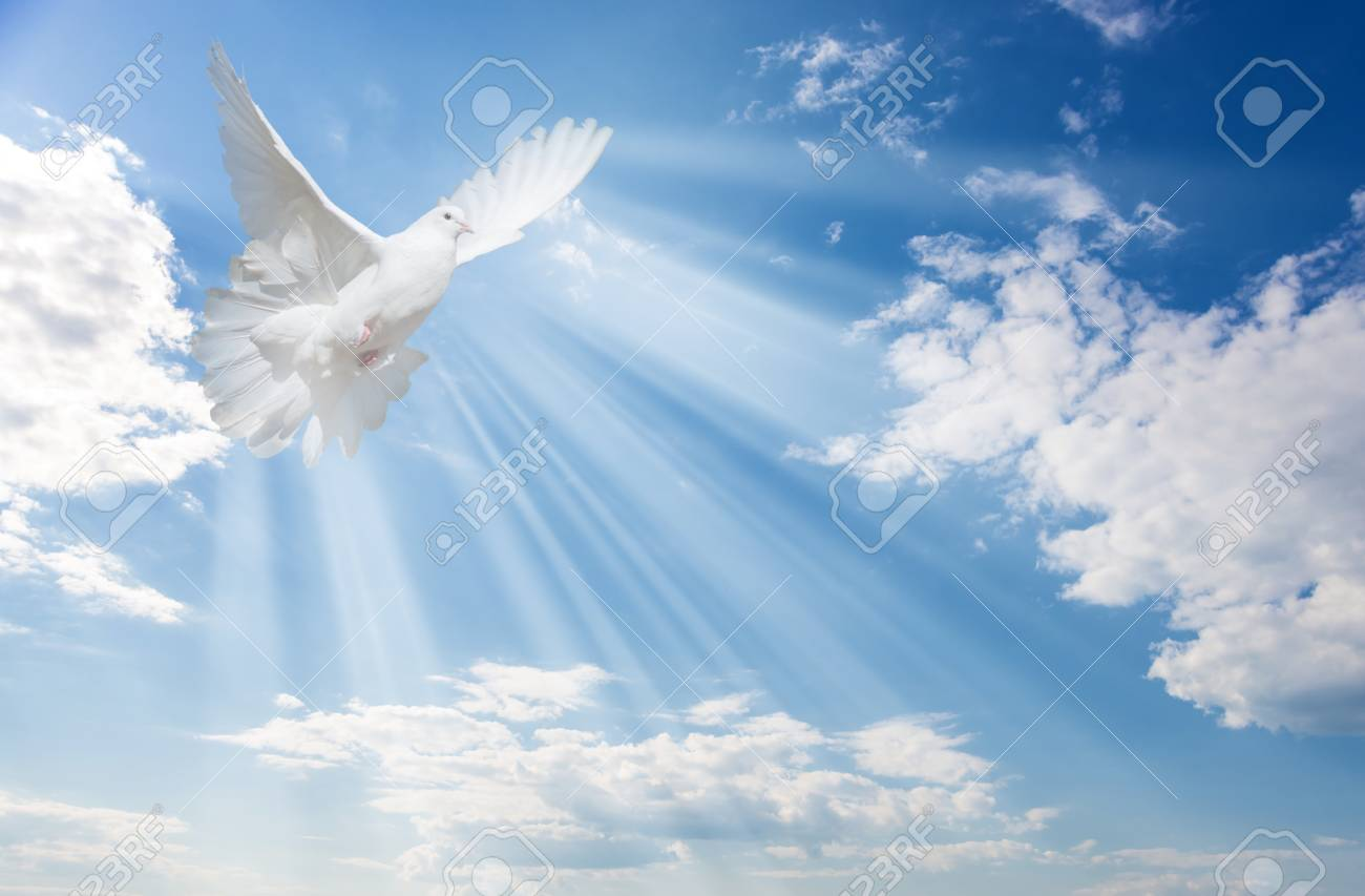 Flying white dove and bright sunbeams on the background of blue sky with fluffy light white clouds - 122122254