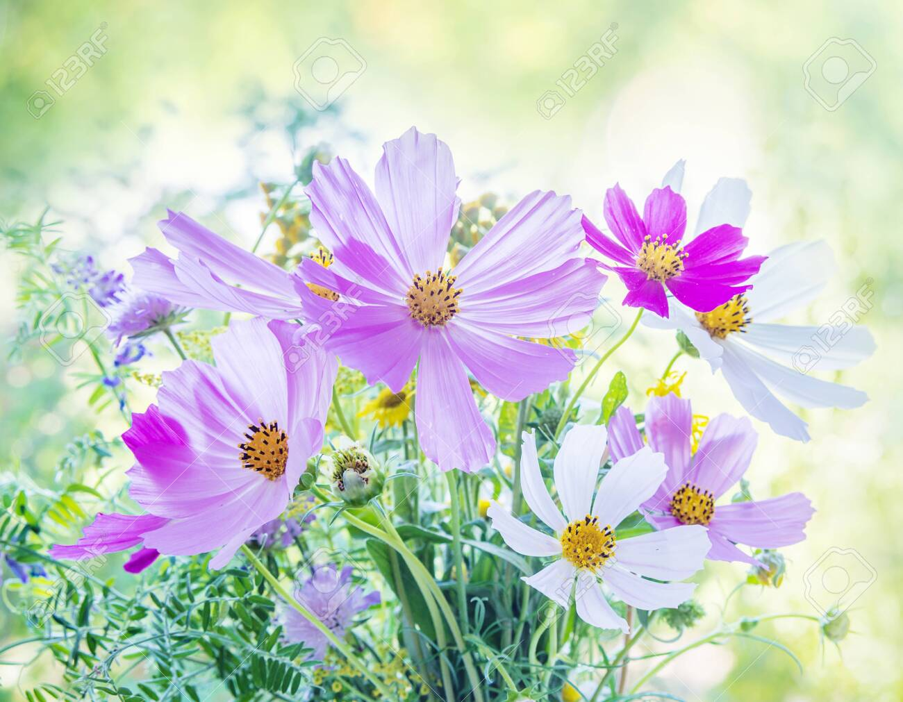 Beautiful multicolored bouquet of wildflowers on a blurred natural background - 124742817