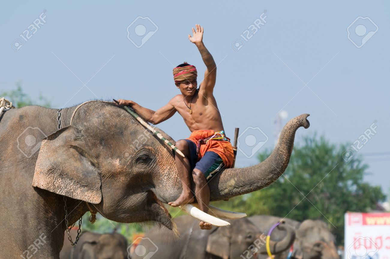 SURIN - NOVEMBER 21: Mahout Riding On The Trunk Of His Elephant ...