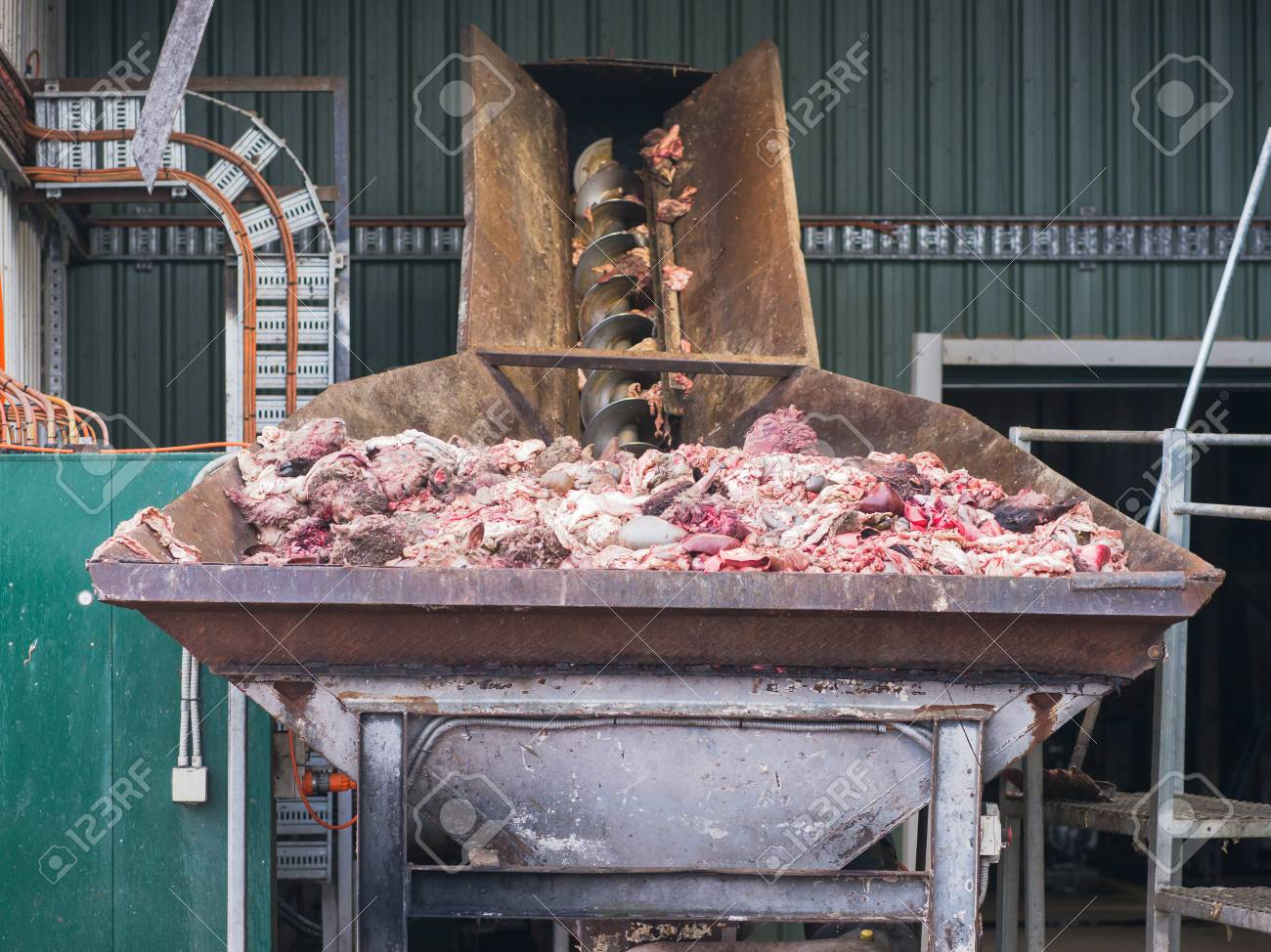 Byproducts from a sheep abattoir in the input bin of a meat and