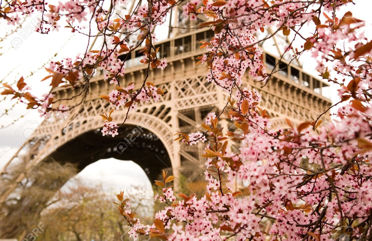 Spring in Paris. Bloomy cherry tree and the Eiffel Tower. Focus on flowers Stock Photo - 10431806