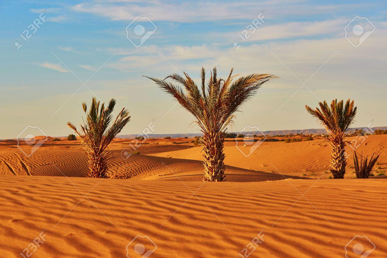 Desert dating maroc best uk dating sites for over 50