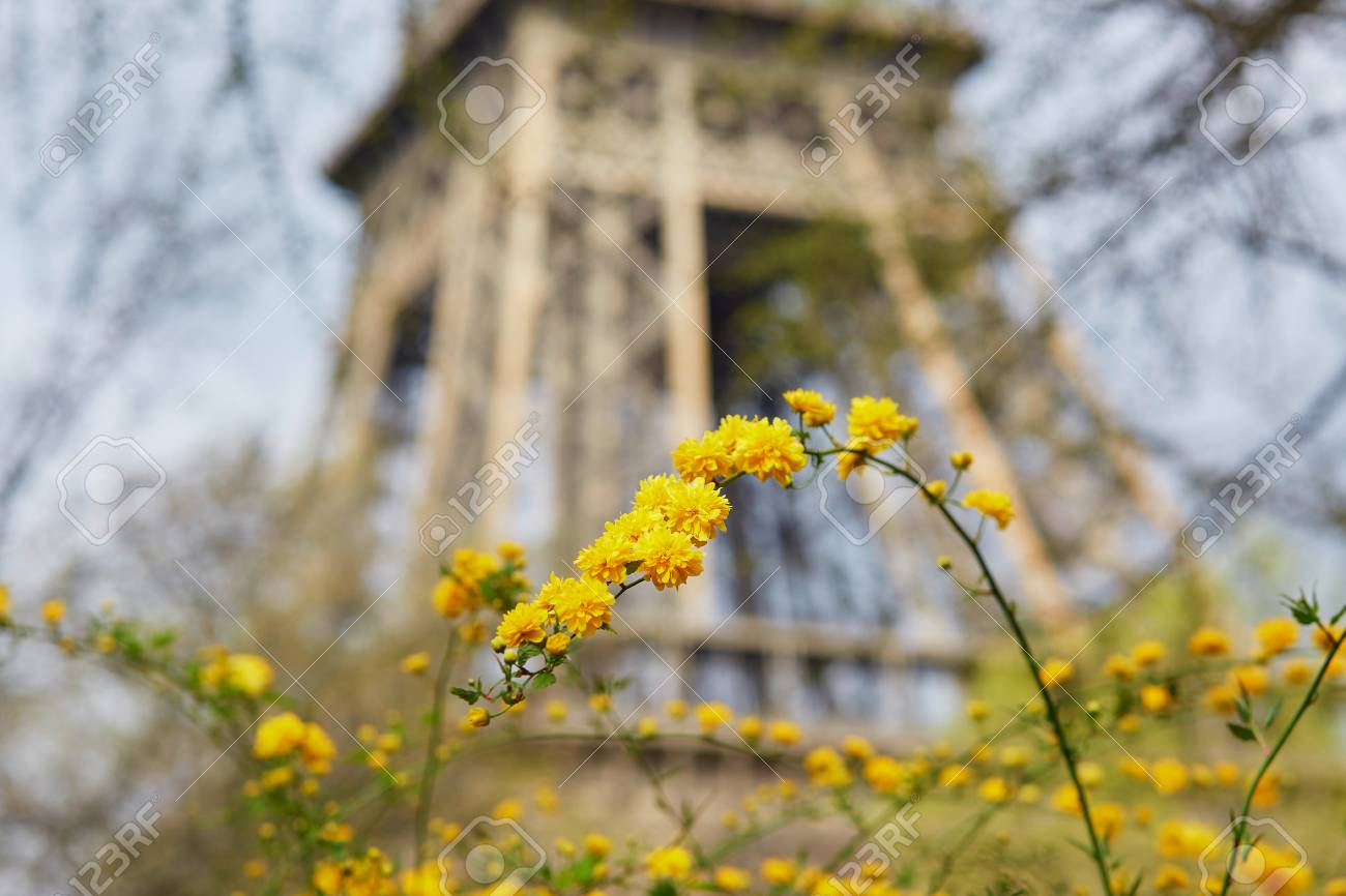 Yellow Flowers In Full Bloom With Eiffel Tower In The Background