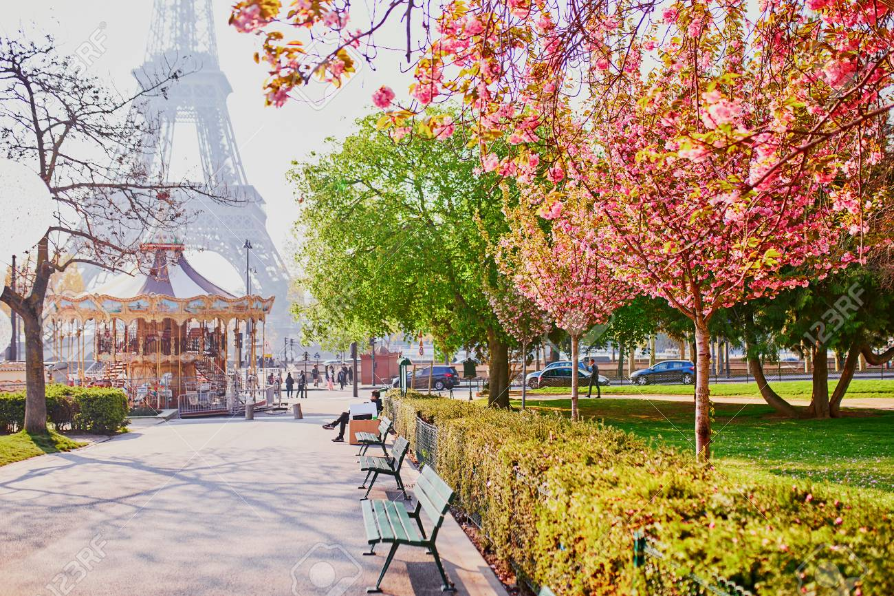 Scenic view of the Eiffel tower with cherry blossom trees in Paris, France on a spring day - 121287093