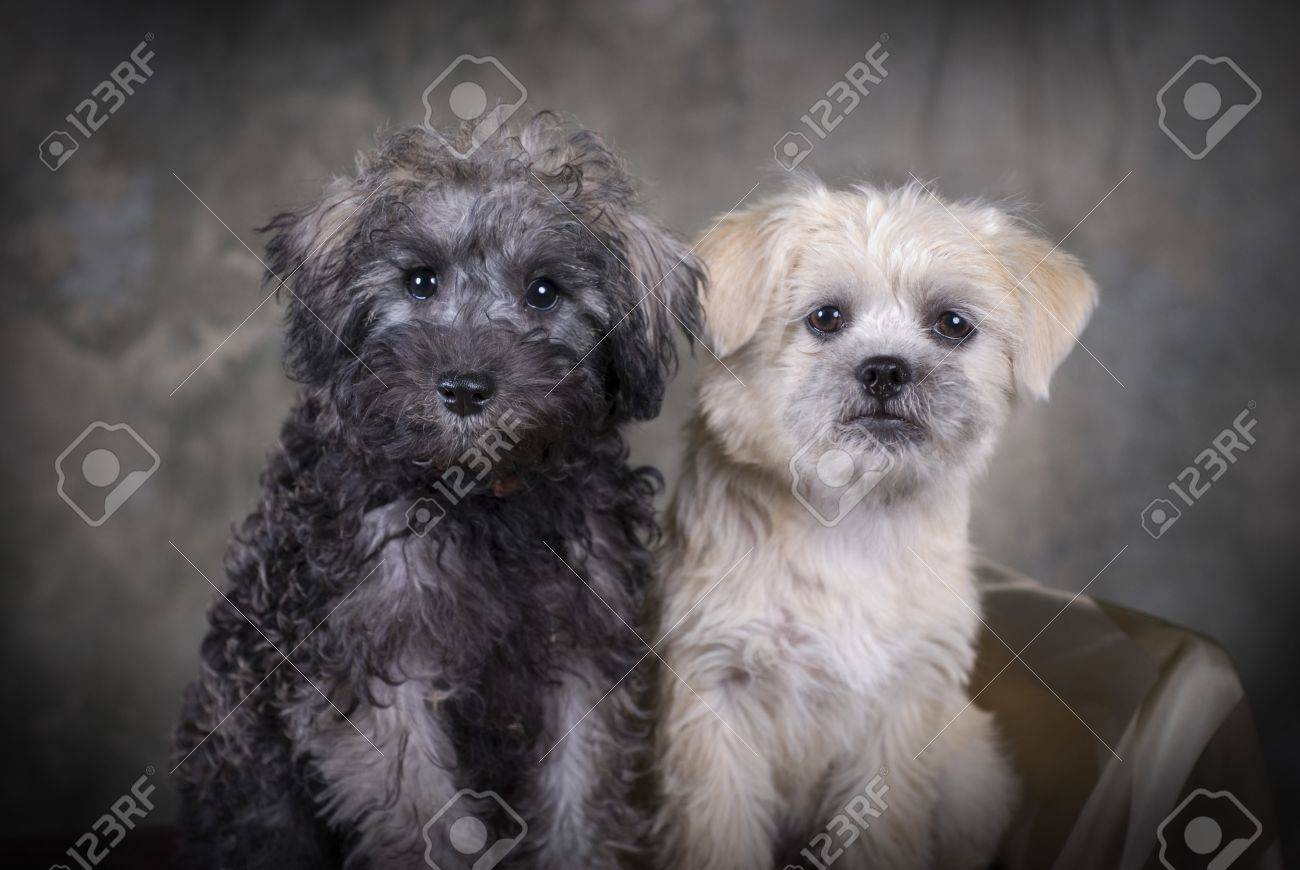 two cute mixed breed puppies sitting next to each other stock photo