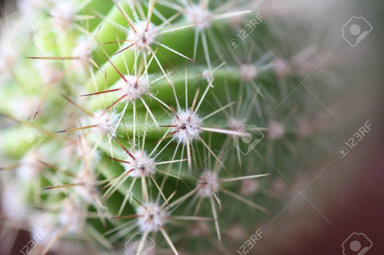 cactus - detail - macro Stock Photo - 16586650