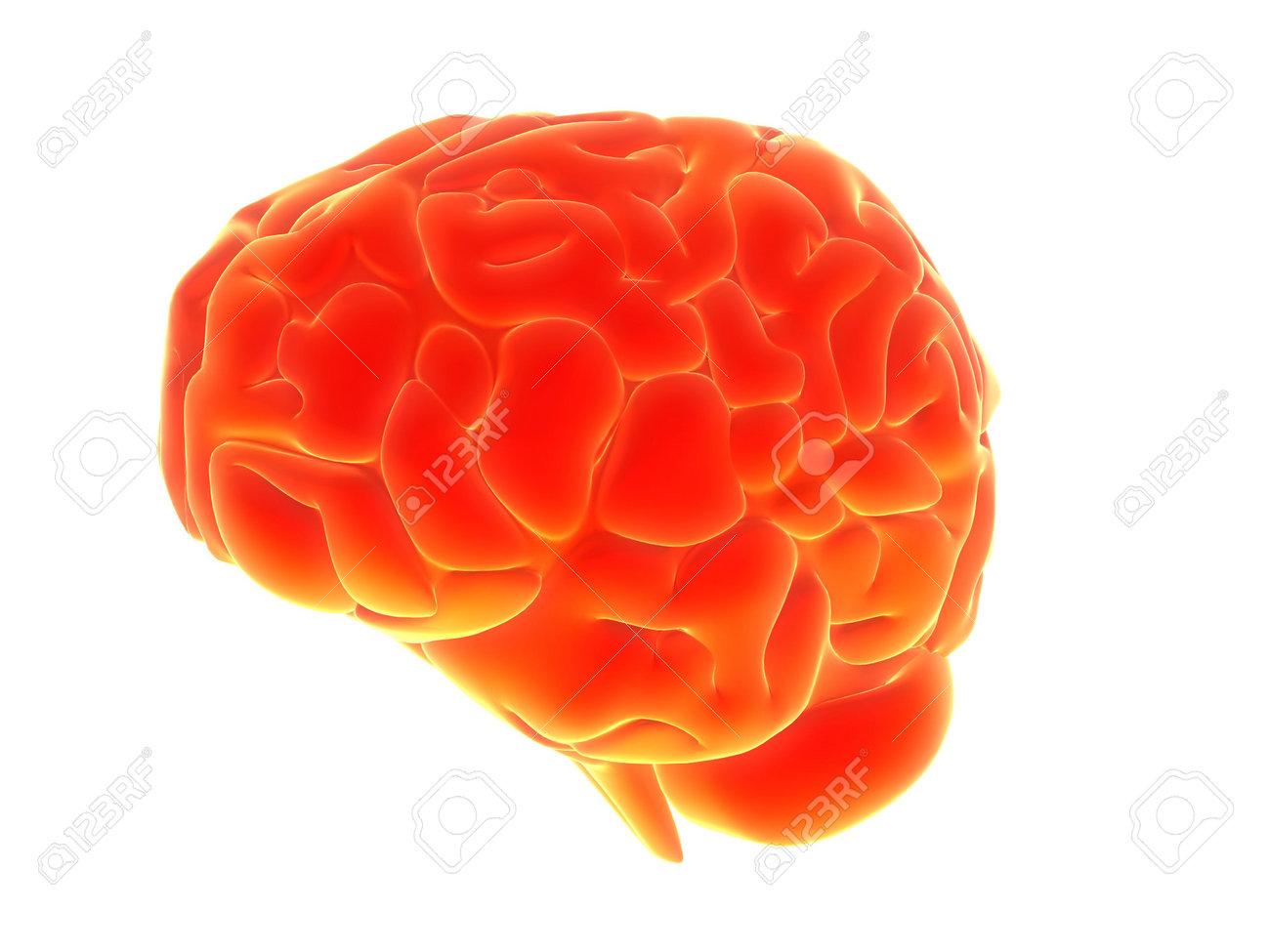 Cerebro humano  Foto de archivo - 511551