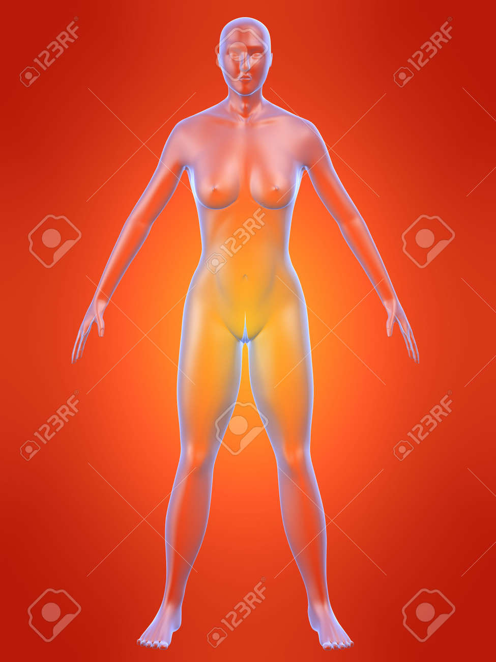 female anatomy Stock Photo - 546705