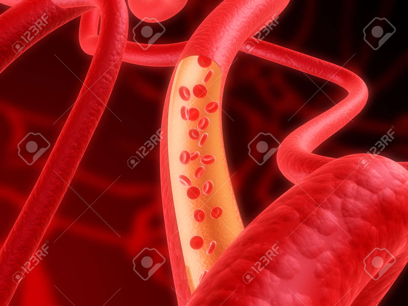 artery Stock Photo - 1424550