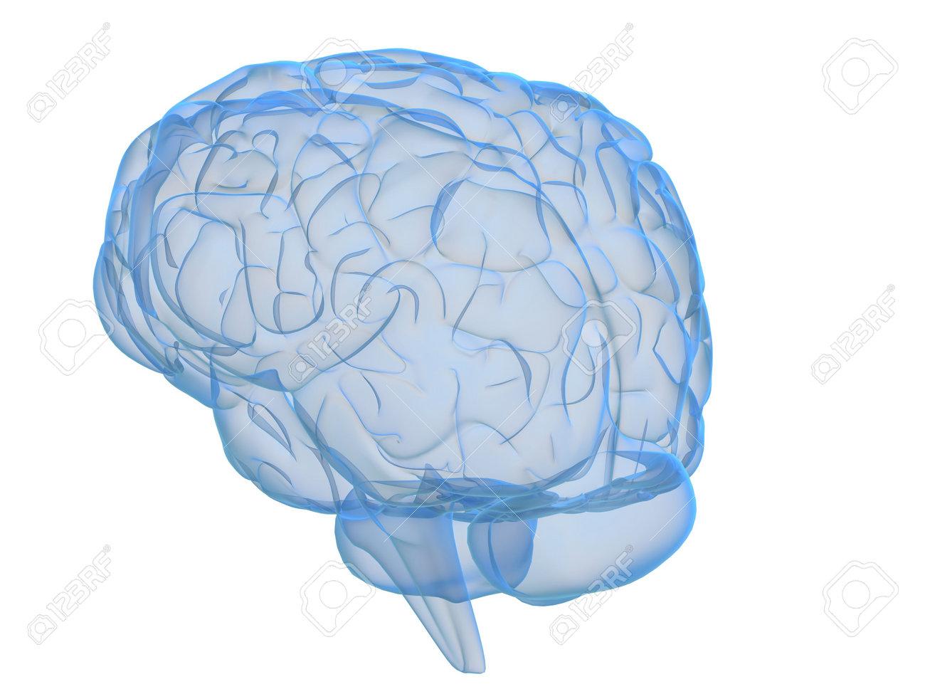 transparent brain Stock Photo - 2883483