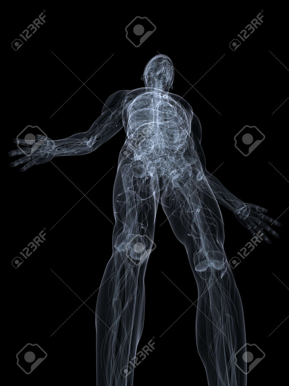 x-ray anatomy Stock Photo - 4696191