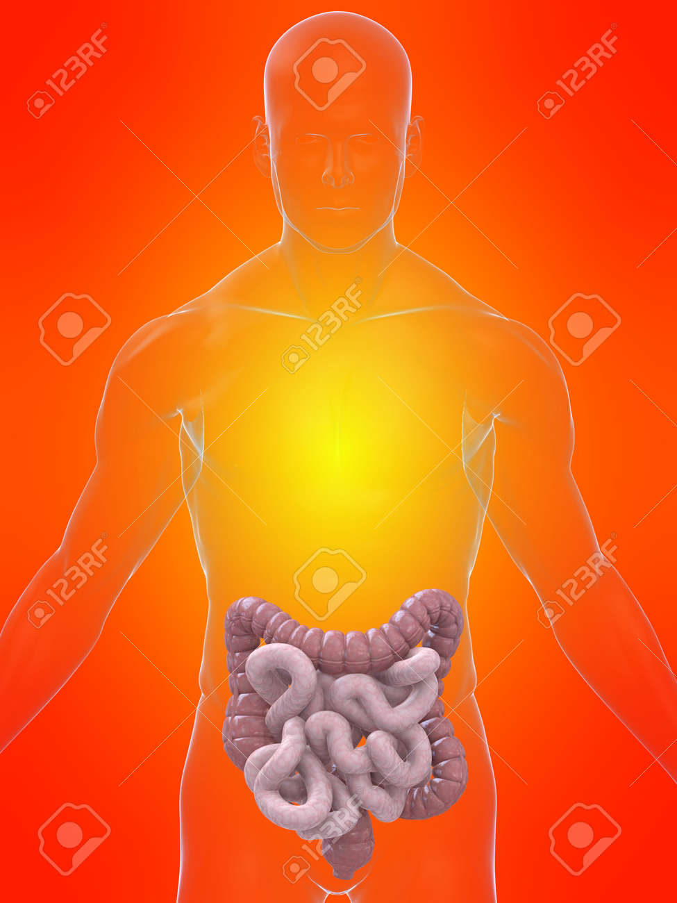 transparent body with intestines Stock Photo - 4696085