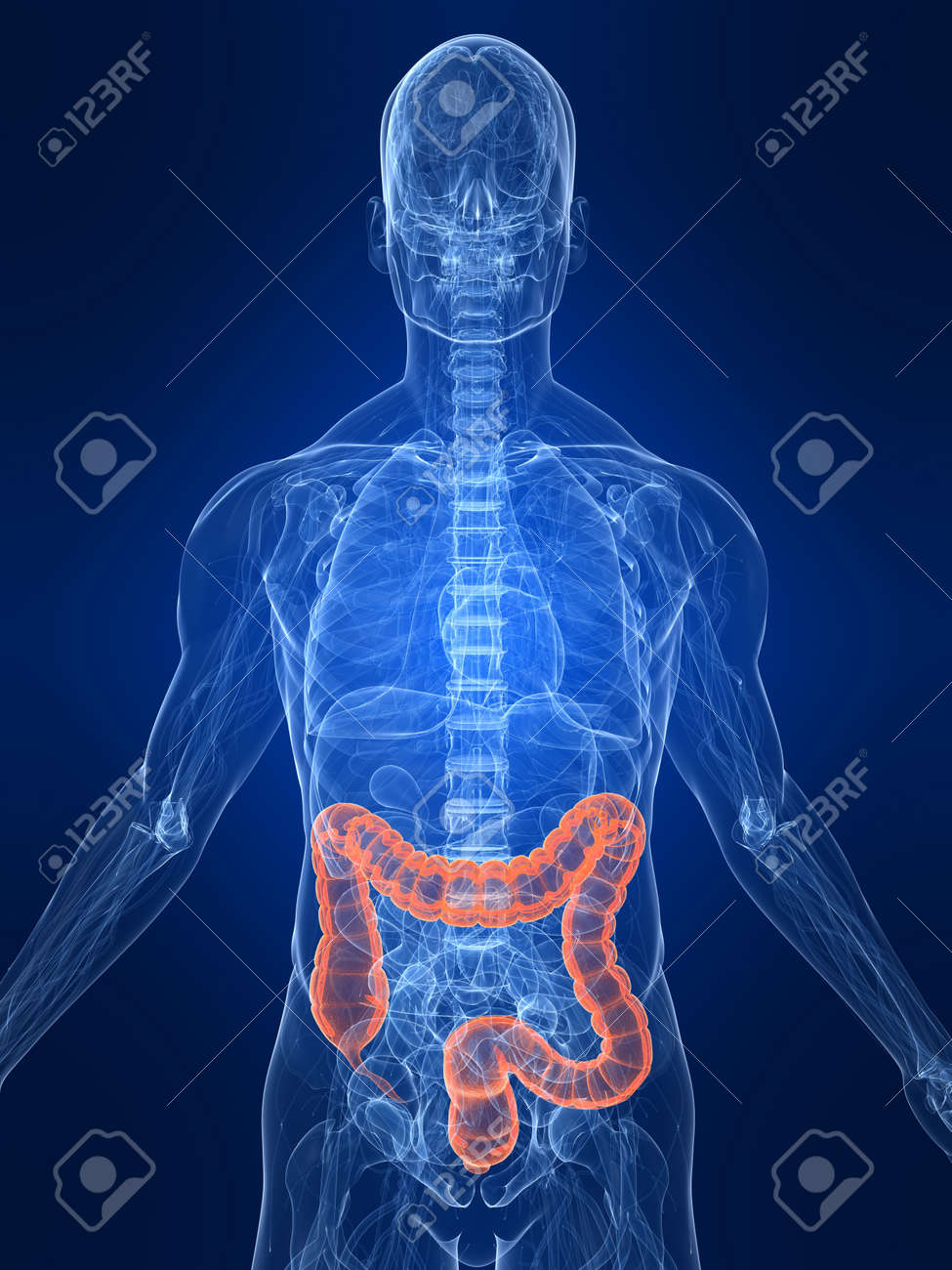 highlighted colon Stock Photo - 4683179
