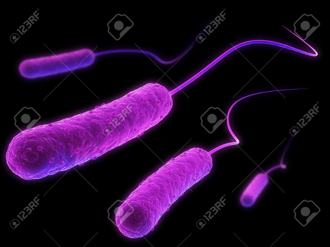 e-coli bacteria Stock Photo - 4844201