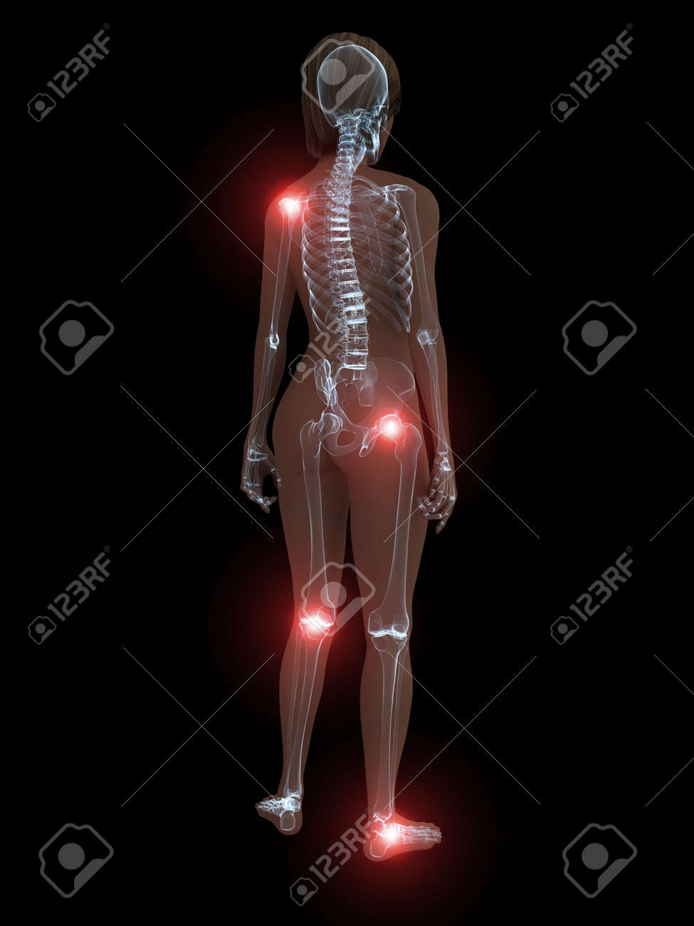 transparent female body with highlighted joints Stock Photo - 4844260