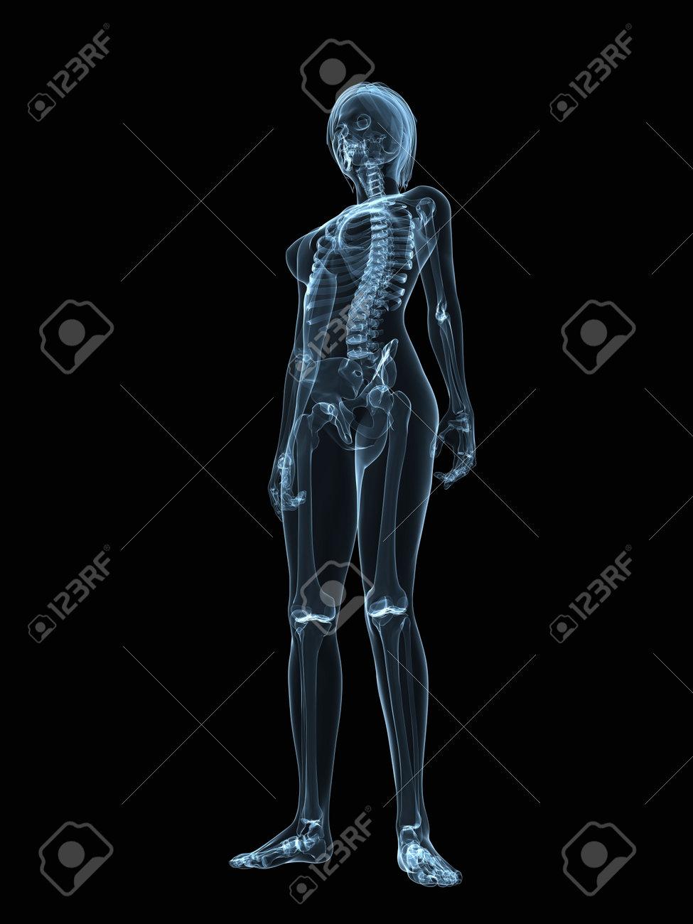 Atemberaubend Anatomie Und Physiologie Skelettsystem Kennzeichnung ...
