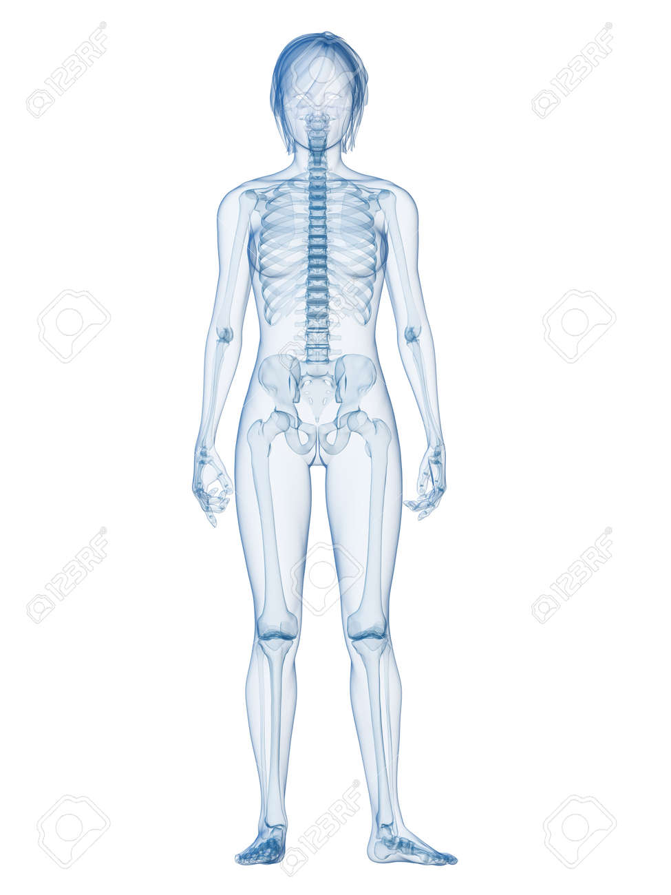Transparent Female Body With Skeletal System Stock Photo, Picture ...
