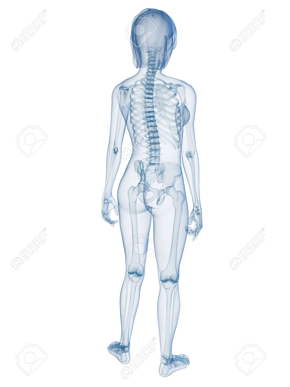 Transparent Weiblichen Körpers Mit Skelett-System Lizenzfreie Fotos ...