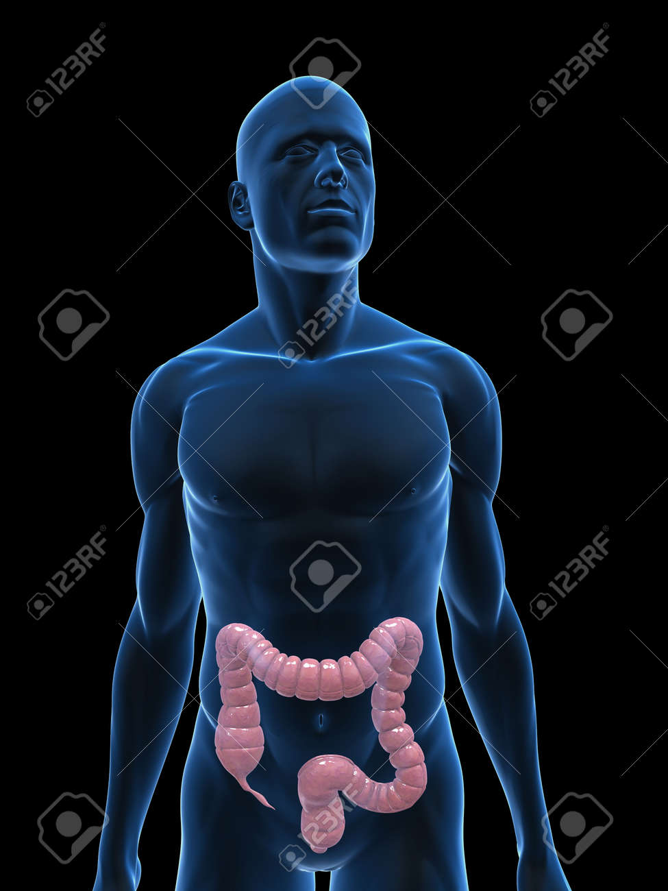 transparent body with colon Stock Photo - 5273084