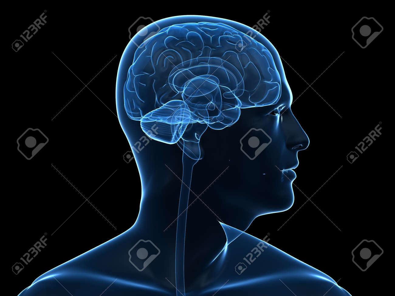 transparent human head shape with brain Stock Photo - 5960381