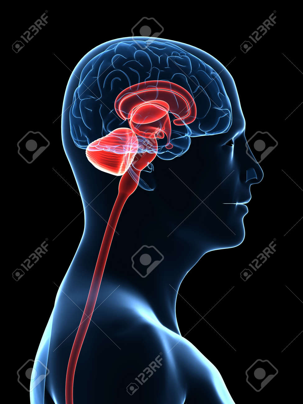transparent human body with brain parts Stock Photo - 5960389