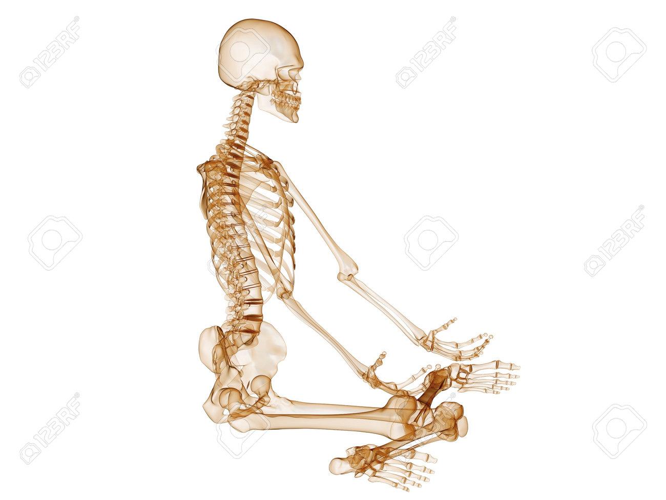 pic of human skeleton – lickclick, Skeleton