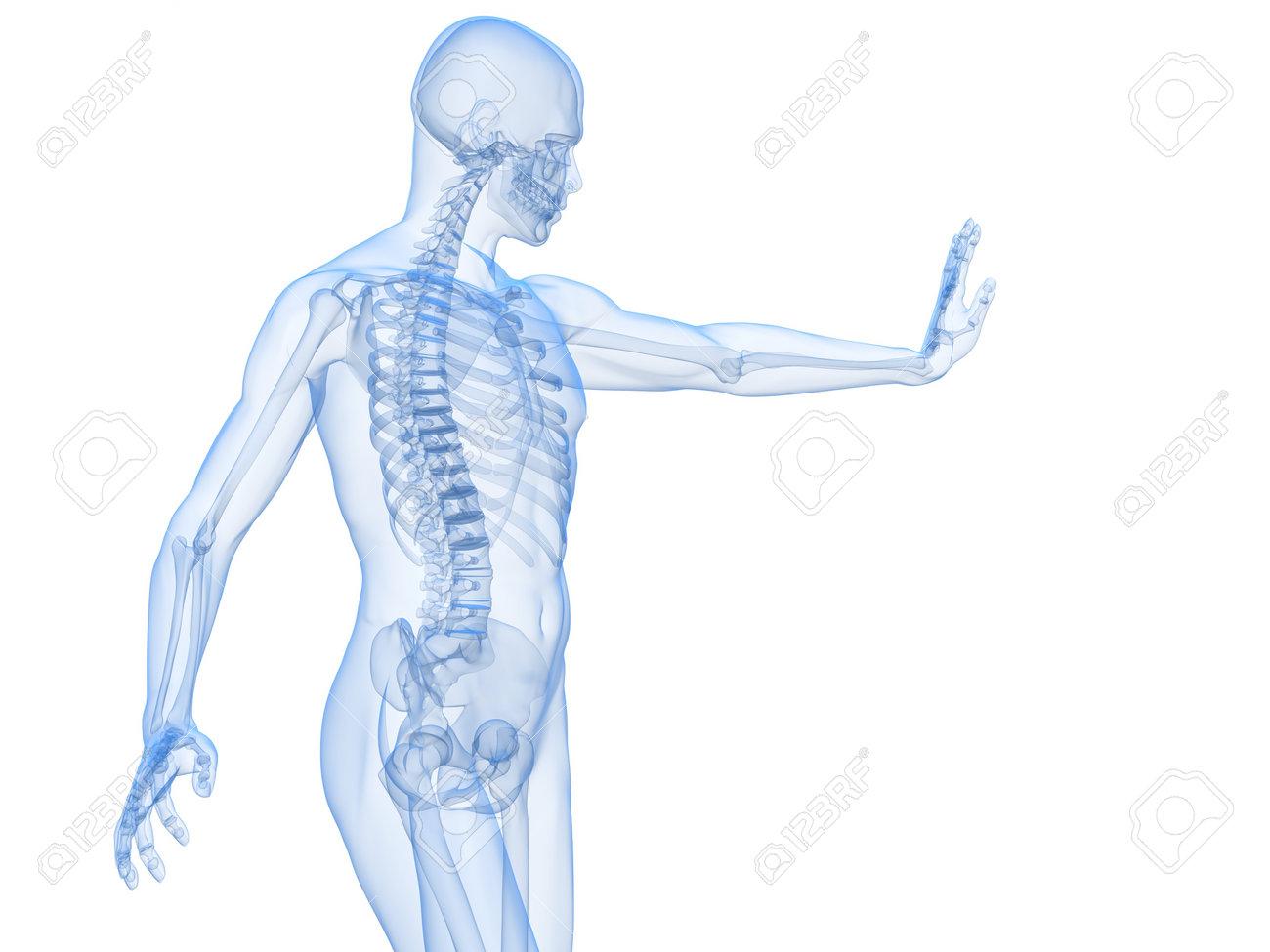 Gemütlich Männlich Skelett System Bilder - Menschliche Anatomie ...