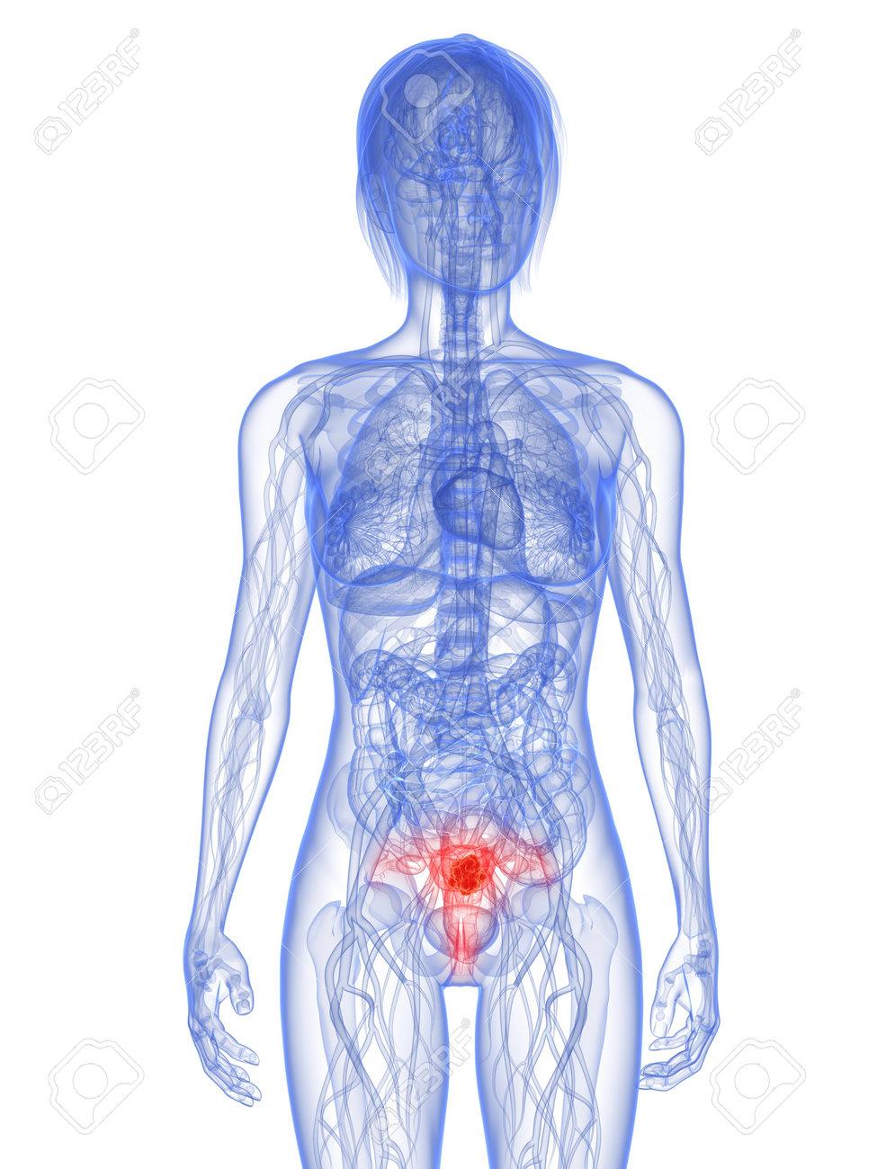 Gemütlich Bild Von Organen Innerhalb Weiblichen Körpers Ideen ...