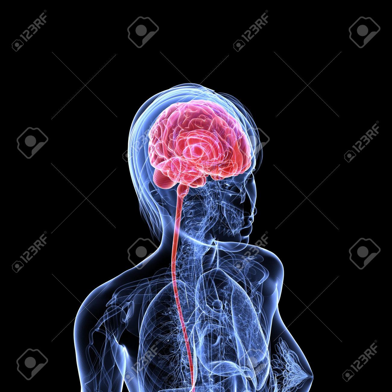 transparent female head with cerebral tumor Stock Photo - 7299923