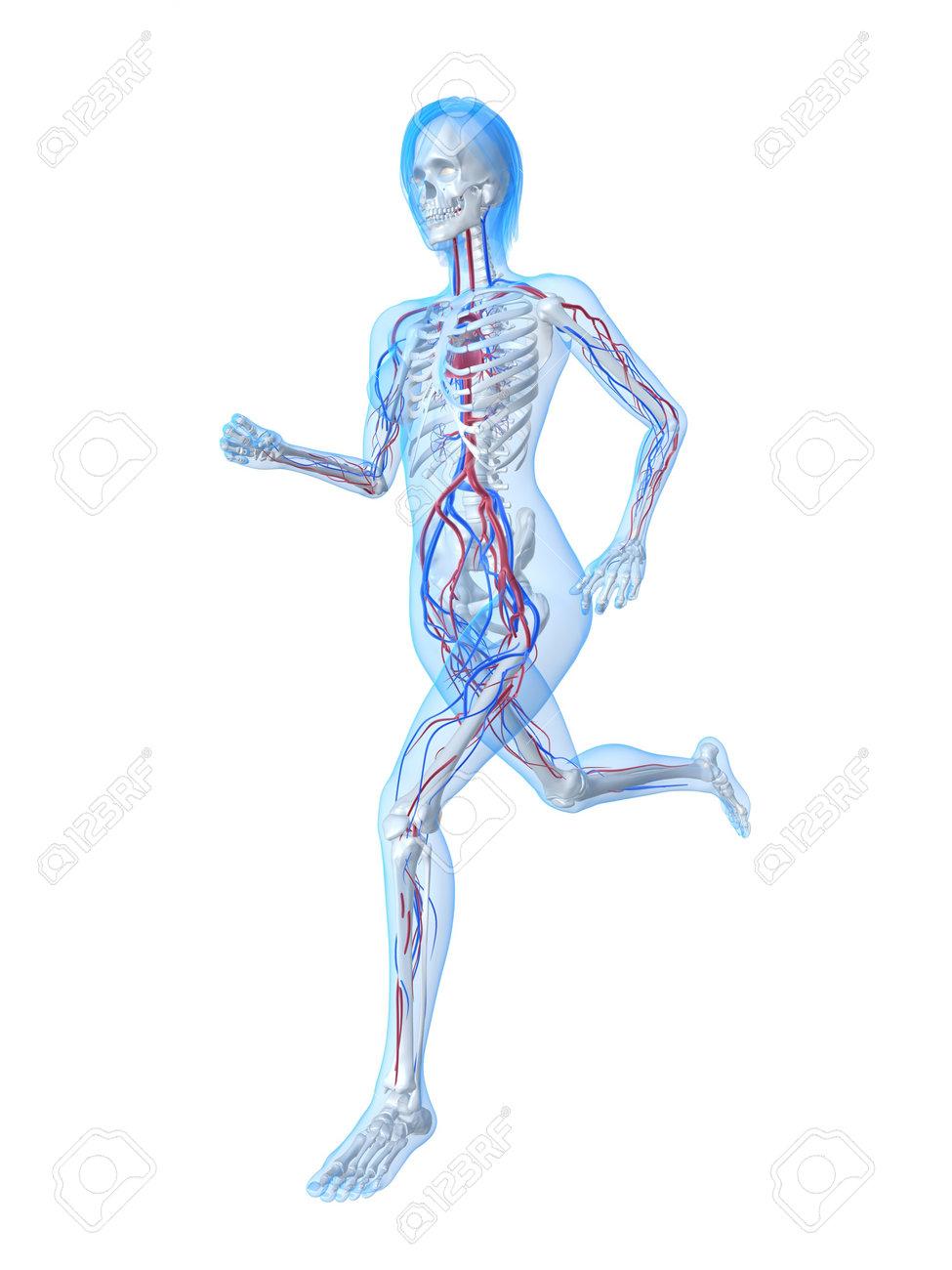 Groß Pic Von Skelett System Bilder - Anatomie Ideen - finotti.info