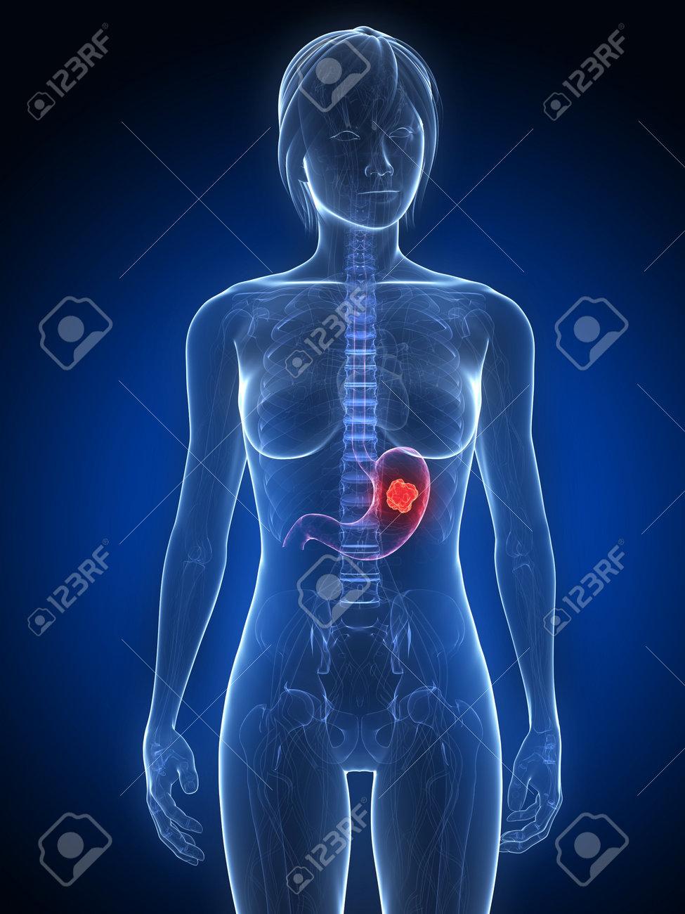 Increíble Anatomía Y Fisiología Humanas Notas Elaboración - Anatomía ...
