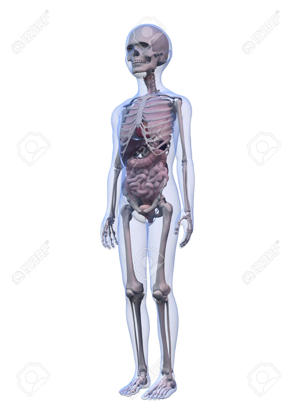 Male Child Anatomy Stock Photo, Picture And Royalty Free Image ...