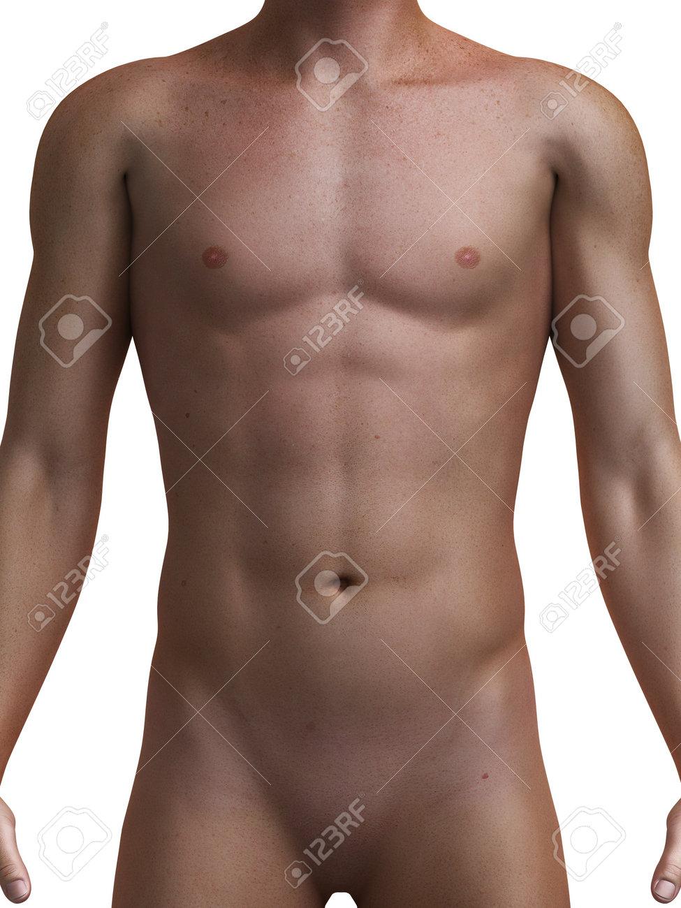3d Rindió La Ilustración Médica De Un Torso Masculino Saludable ...