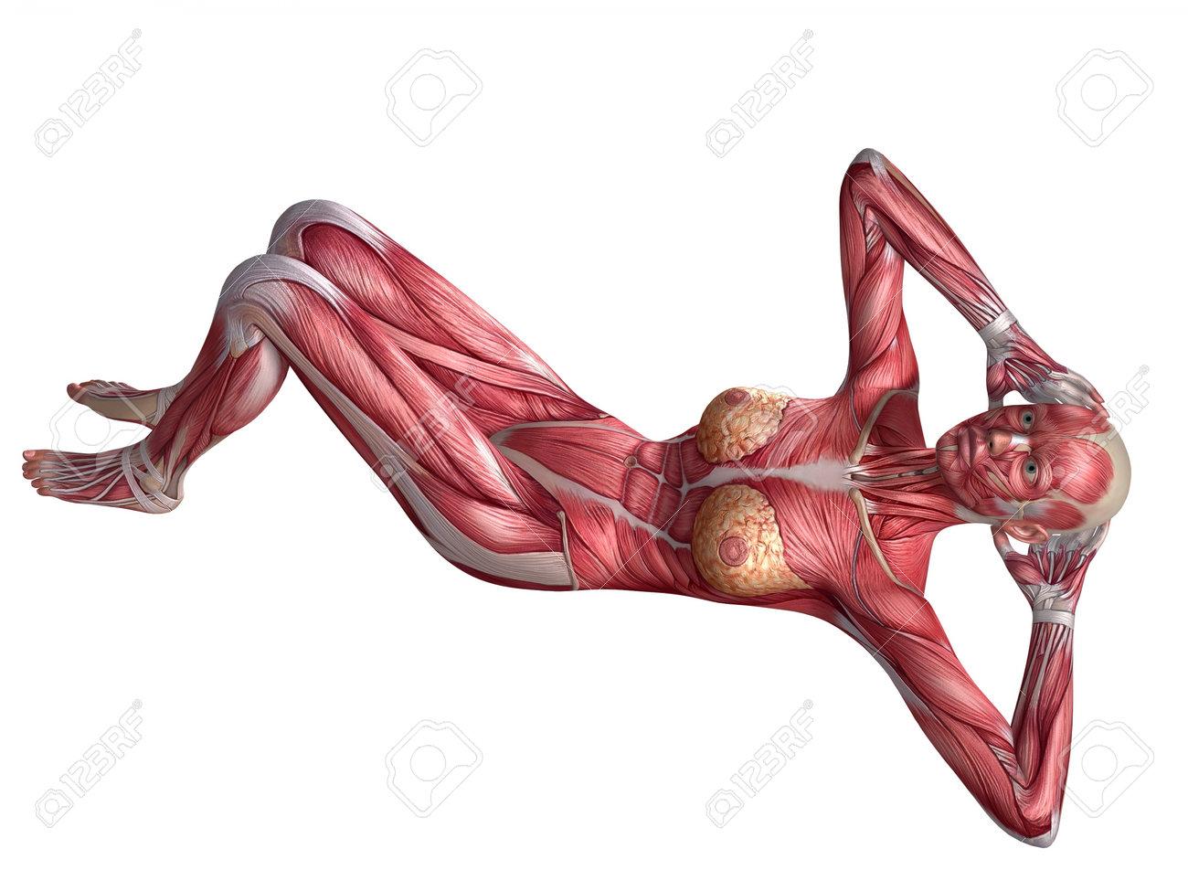 Anatomy Of Abs Gallery - human body anatomy