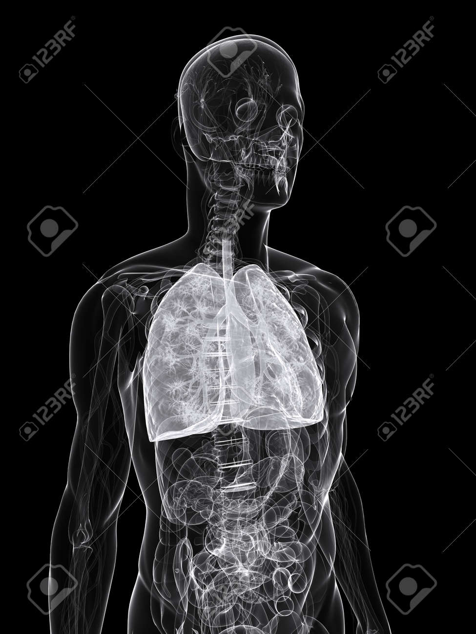 X-ray - Anatomy Illustration - Lung Stock Photo, Picture And Royalty ...