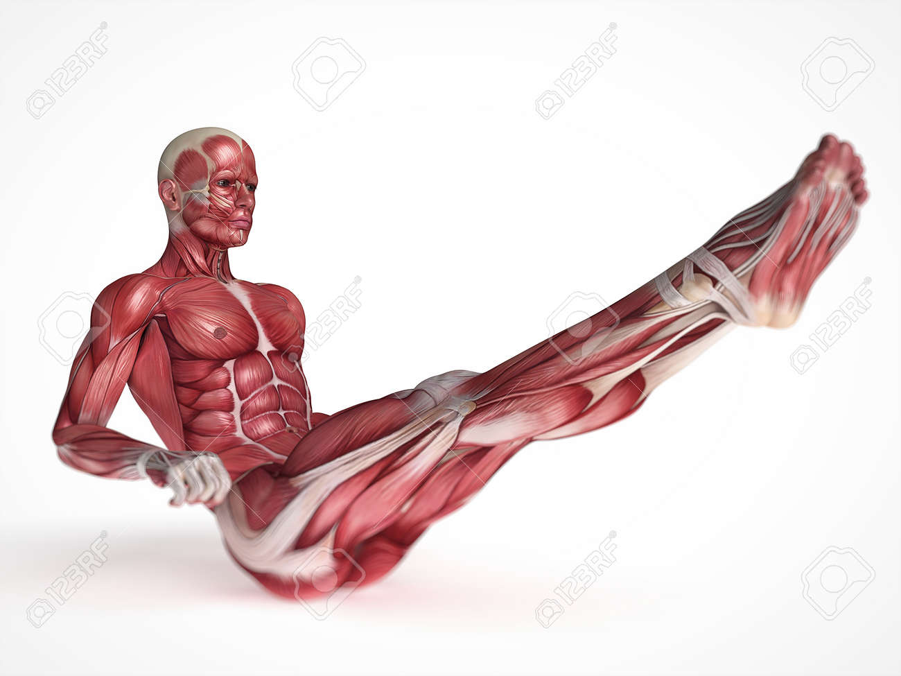 3d rendered scientific illustration of the males muscles Stock Illustration - 13004963