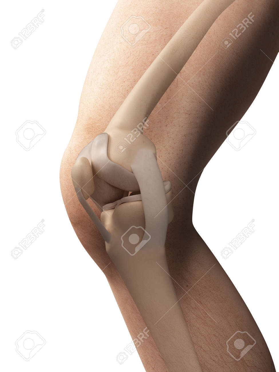 3d Rendered Illustration Anatomy Of The Knee Stock Photo Picture