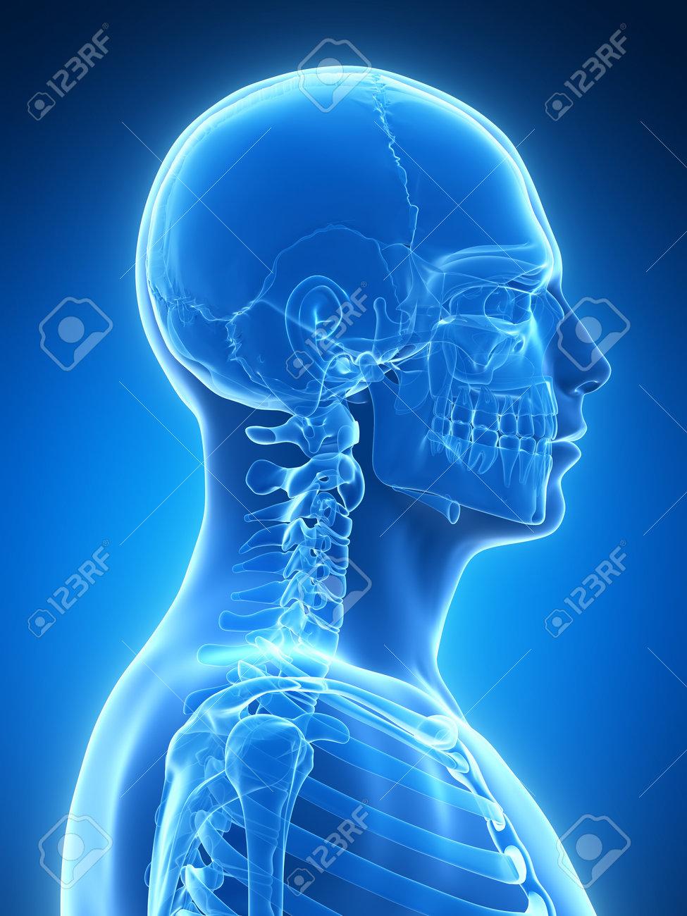 3d rendered illustration - skeletal neck Stock Illustration - 18071335