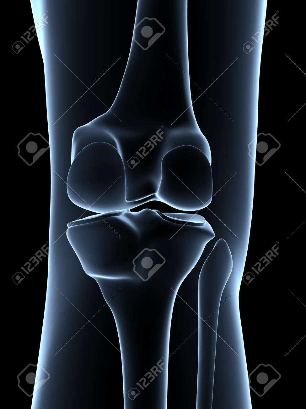 Knee anatomy 3d image collections human body anatomy joint xray view 3d illustration stock photo 3d rendered illustration knee anatomy stock photo picture and ccuart Images