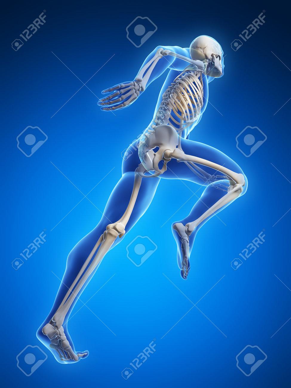 3d rendered illustration - runner anatomy Stock Illustration - 18071029