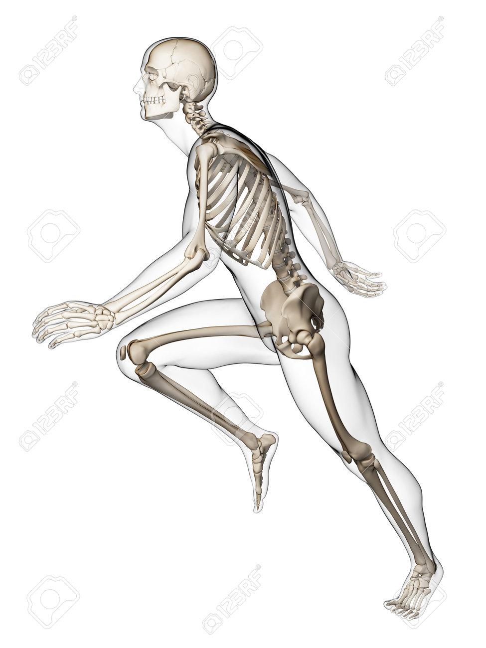 3d rendered illustration - runner anatomy Stock Photo - 18070701